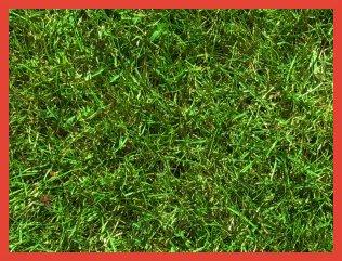 Искусственная трава в Барнауле